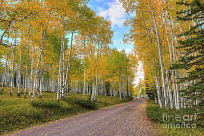 Photograph - Autumn Country Road by Spencer Baugh
