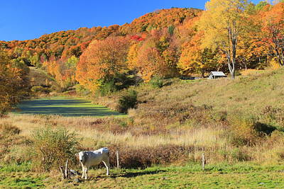 Photograph - Autumn Country Scene Pomfret Vermont by John Burk