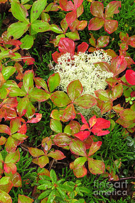 Photograph - Autumn Cover by Frank Townsley