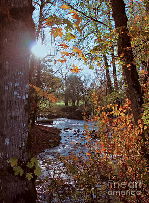 Photograph - Autumn Creek by Erica Hanel