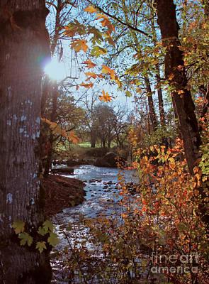 Photograph - Autumn Creek by Erica Hanel