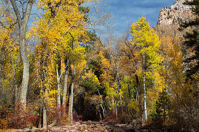 Photograph - Autumn Creek by Kathleen Bishop