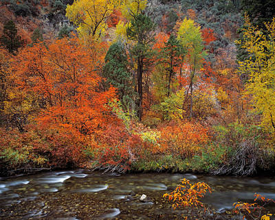Photograph - Autumn Creek by Leland D Howard