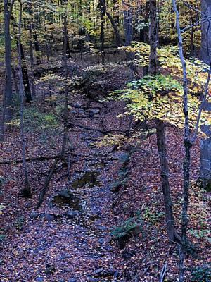 Wall Art - Photograph - Autumn Creek by Robert Papps