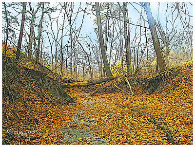 Photograph - Autumn Creekbed by Michael A Klein