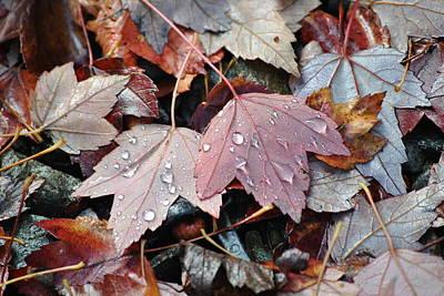Autumn Cries Art Print