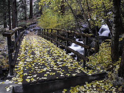Photograph - Autumn Crossing by Dusty Wynne
