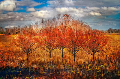 Photograph - Autumn Cypress by Debra and Dave Vanderlaan