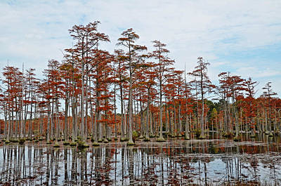 Photograph - Autumn Cypress by Linda Brown