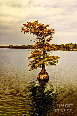 Pellegrin Photograph - Autumn Cypress by Scott Pellegrin