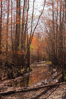 Photograph - Autumn Cypress Swamp Along The Waccamaw by MM Anderson
