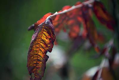 Digital Art - Autumn Dark by Patrick Groleau