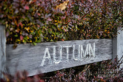 Photograph - Autumn by David Arment