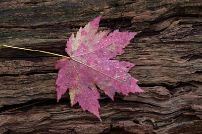Photograph - Autumn by David Watkins