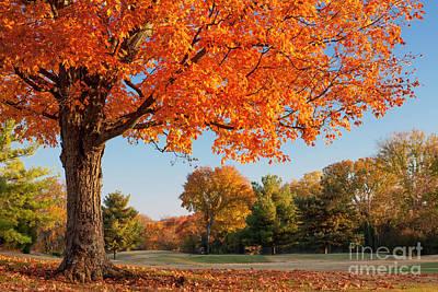 Autumn Dawn Art Print by Brian Jannsen