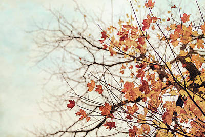 Photograph - Autumn Day by Angie Rea