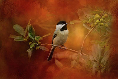 Autumn Day Chickadee Bird Art Print by Jai Johnson