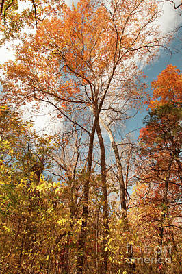 Photograph - Autumn Day by Iris Greenwell