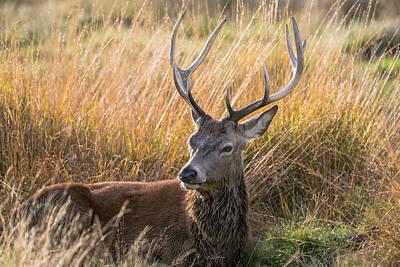 Photograph - Autumn Deer by Matt Malloy