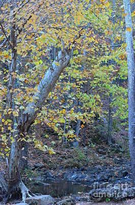 Photograph - Autumn Delight by Maria Urso