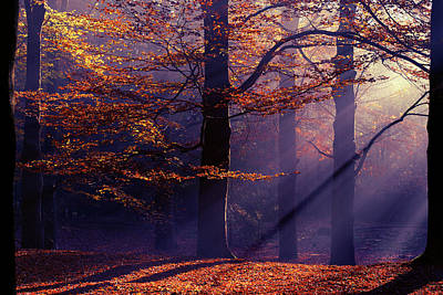 Beech Photograph - Autumn Delight by Roeselien Raimond
