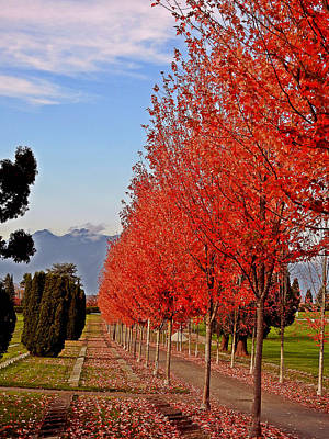 Photograph - Autumn Delight, Vancouver by Brian Chase