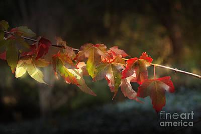 Photograph - Autumn Delights by Elaine Teague