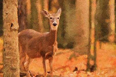 Moment Mixed Media - Autumn Doe by Dan Sproul