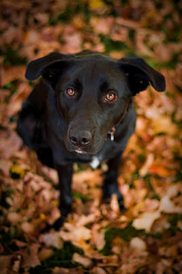 Fall Foliage Photograph - Autumn Dog by Adam Romanowicz