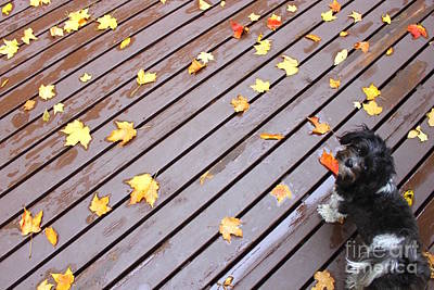 Photograph - Autumn Dog by Samiksa Art