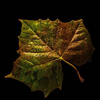 Autumn Leaf Photograph - Autumn by Don Spenner