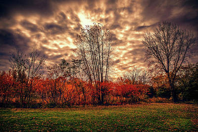 Photograph - Autumn Drama by Lilia D