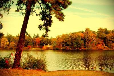 Photograph - Autumn Dream - Lake Carasaljo by Angie Tirado