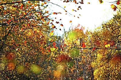 Photograph - Autumn Dream by Debbie Oppermann