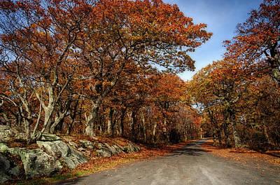 Photograph - Autumn Dreams 1 by Lara Ellis
