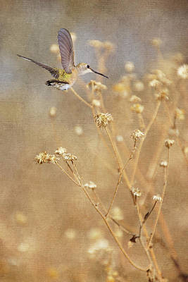 Photograph - Autumn Dreams I by Leda Robertson