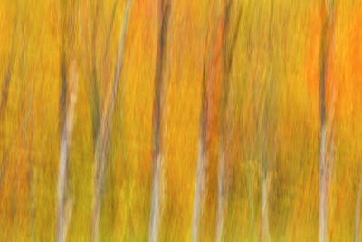 Photograph - Autumn Dreams by Mike Lang