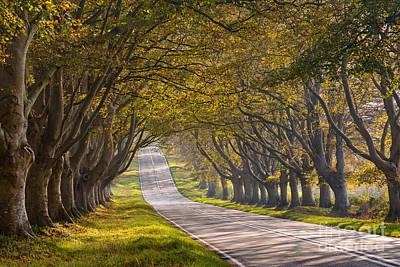 Autumn Drive Art Print by Richard Thomas