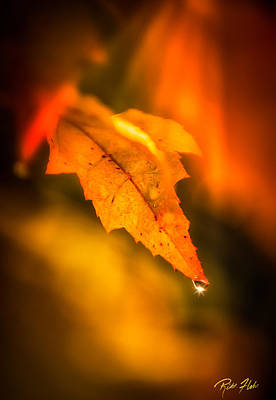 Photograph - Autumn Drops by Rikk Flohr
