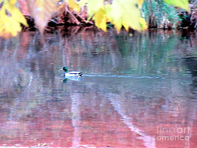 Photograph - Autumn Ducky Oak Creek by Marlene Rose Besso