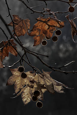 Photograph - Autumn by Edgar Laureano