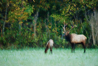 Photograph - Autumn Elk by Lana Trussell