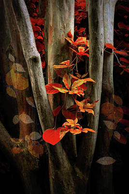 Photograph - Autumn Epilogue by Jessica Jenney