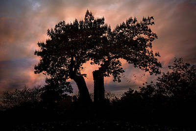 Photograph - Autumn Evening Sunset Silhouette by Chris Lord