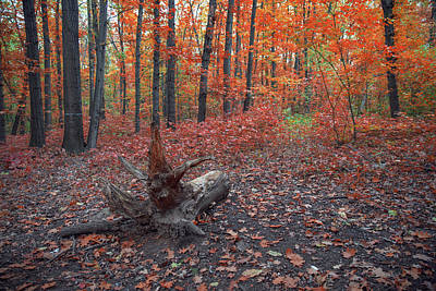 Photograph - Autumn. Fall. Autumnal Park. Autumn Trees And Leaves by Julian Popov