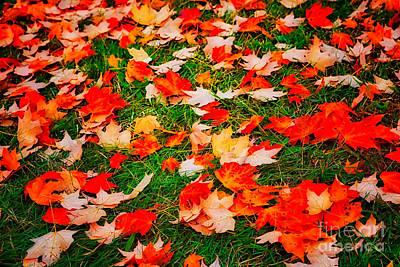 Photograph - Autumn Fall Colors 18 Fx by Dan Carmichael