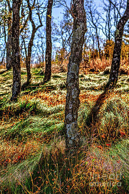 Photograph - Autumn Fall Colors - Blue Ridge Hike by Dan Carmichael