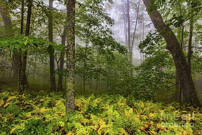 Photograph - Autumn Fall Colors - Brilliant Ferns In The Blue Ridge by Dan Carmichael