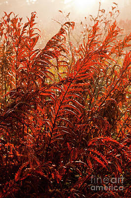 Photograph - Autumn Fall Colors - Fall Ferns by Dan Carmichael