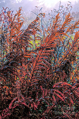 Autumn Fall Colors - Fall Ferns Fx Art Print